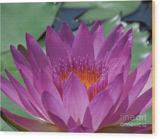 Fuchsia Water Lily Wood Print