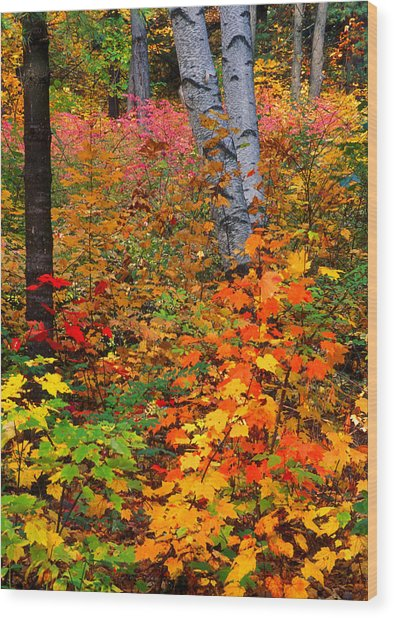 Full Fall Palette Wood Print