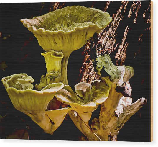 Fungus Among Us Wood Print by Michael Putnam