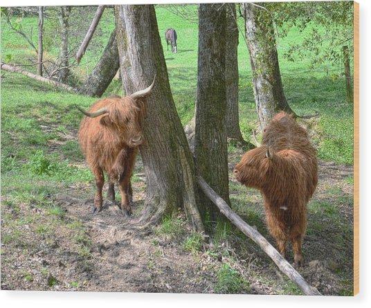 Fuzzy Cows Wood Print by Bob Jackson