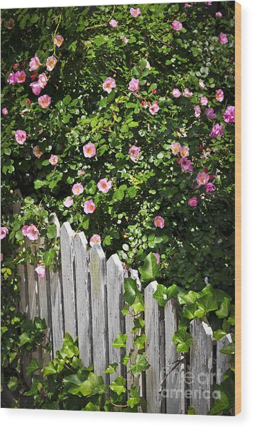 Garden Fence With Roses Wood Print