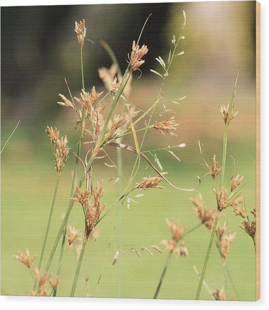 Garden Grass From A Different Angle, By Wood Print