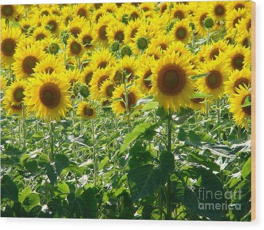 Garden Of Sunshine Wood Print