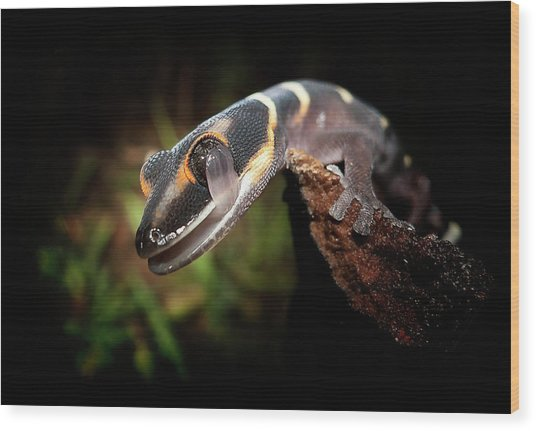 Gecko Wood Print by Kristian Bell