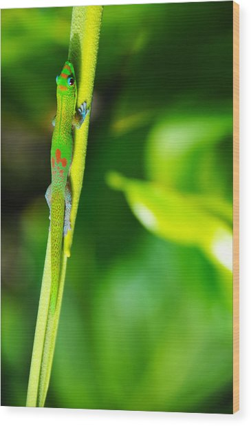 Gecko On A Stick Wood Print
