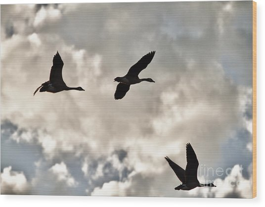 Geese Against The Sky Wood Print by Christopher Purcell