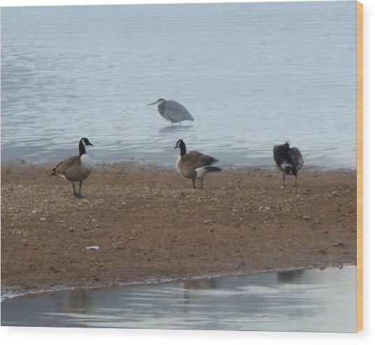 Geese And Heron Wood Print
