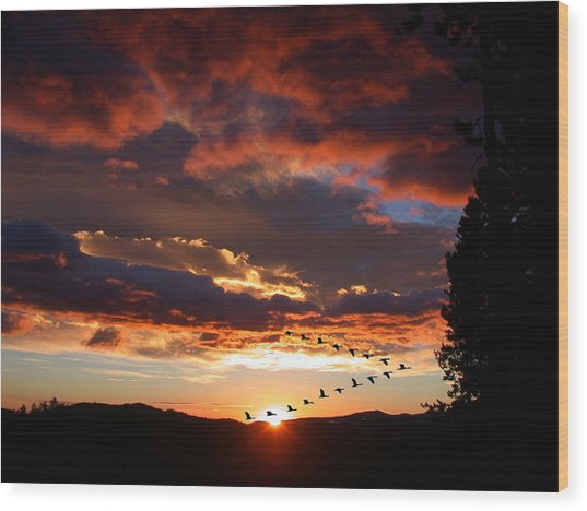 Geese Flying At Sunset Wood Print