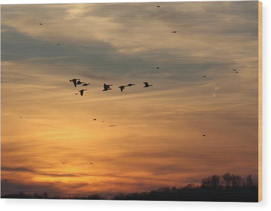Geese In Sunset Wood Print