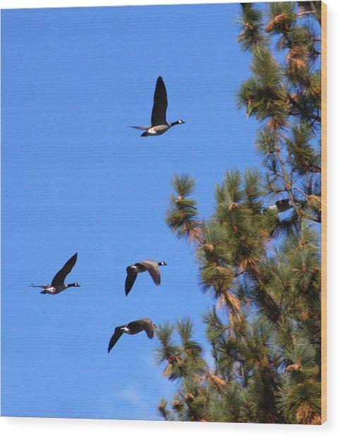 Geese In Tahoe Wood Print by Ernie Claudio