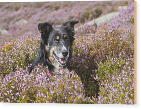Gelert - My Dog Wood Print by Rory Trappe
