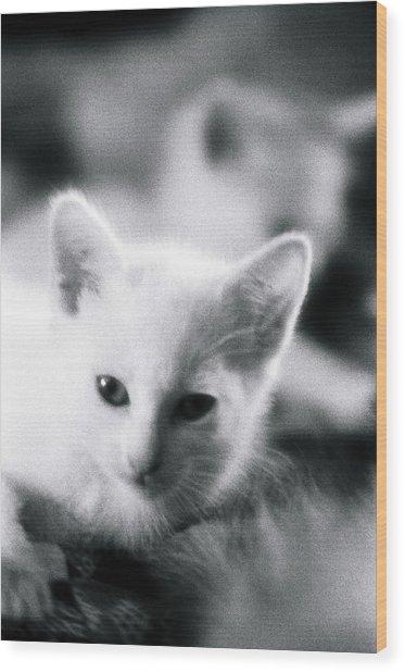 Ghost Kitties Wood Print