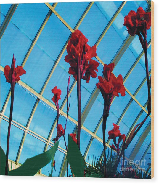 Giant Canna Lilly Wood Print