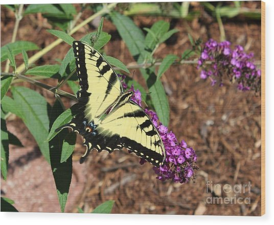 Giant Swallowtail Butterfly Wood Print by Theresa Willingham