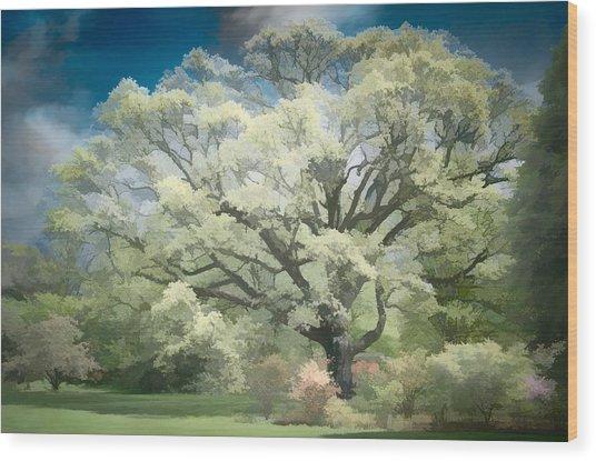 Giant White Oak Spring Wood Print