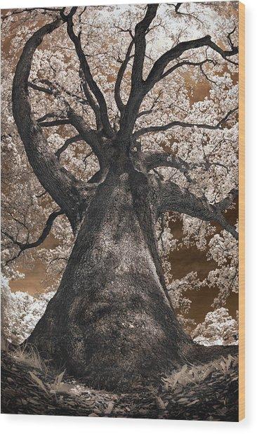 Giant White Oak Wood Print