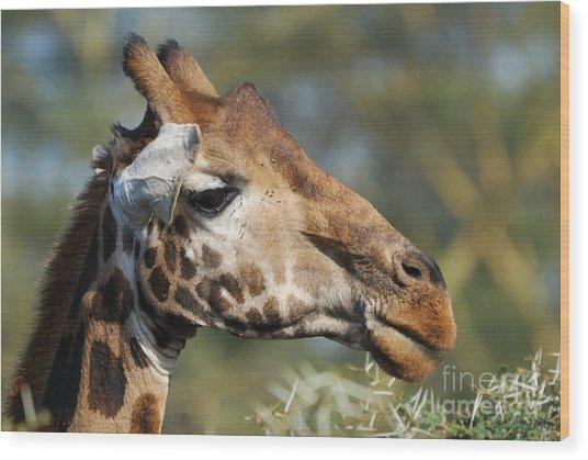 Giraffe Wood Print by Alan Clifford