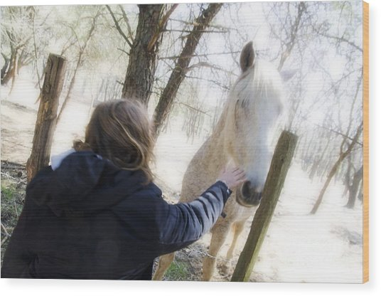 Girl Stroking Camargue Horse At Fence Wood Print by Sami Sarkis