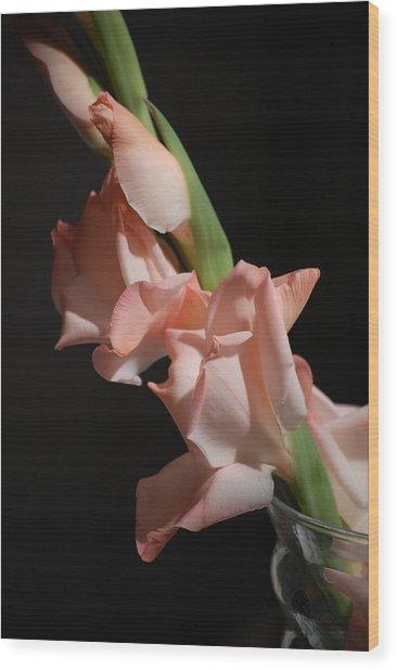 Gladiolus Wood Print by Dickon Thompson