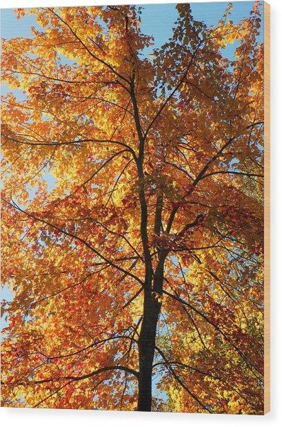Glory Of Autumn Wood Print by Jennifer Compton
