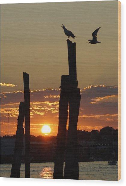 Gloucester Sunset Wood Print by Matthew Green