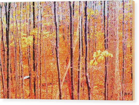 Glowing Forest  Wood Print by Lyle Crump