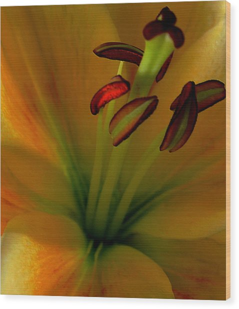 Glowing Lily Wood Print