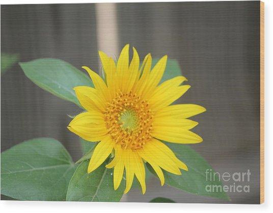 God's Sunflower Wood Print