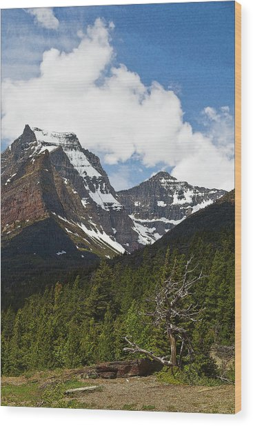 Going To The Sun Mountain Glacier National Park Spring Tree Larry Darnell Wood Print by Larry Darnell