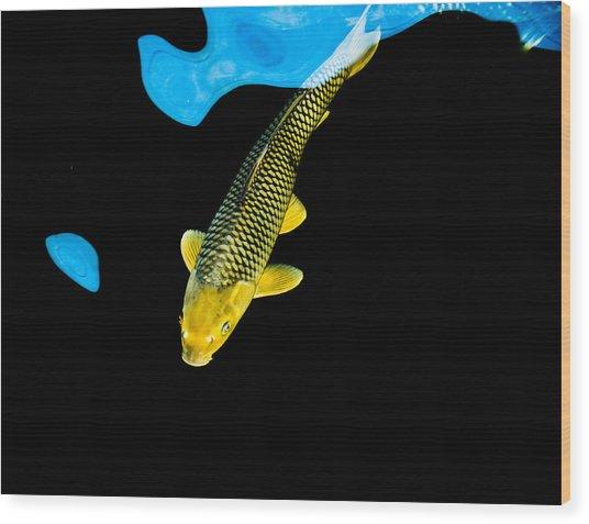 Gold Chagoi01 Wood Print