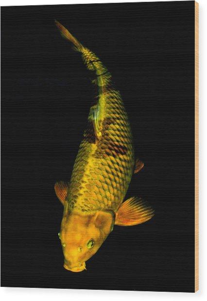 Gold Chagoi02 Wood Print