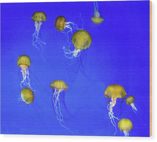 Gold Jelly Swarm Wood Print