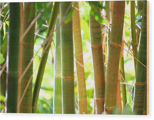 Golden Bamboo Wood Print