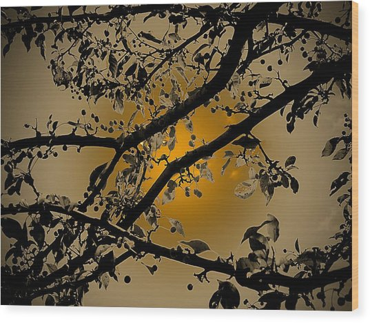 Golden Crabapple Wood Print