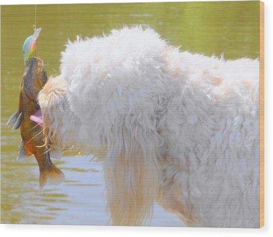 Golden Doodle And Goggle Eye Wood Print by Betty Berard