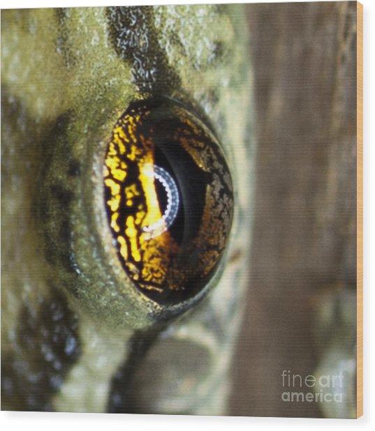 Golden Eye Wood Print