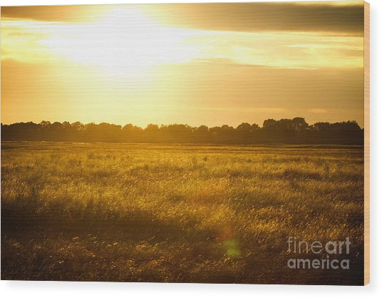 Golden Field Wood Print by James Serikov