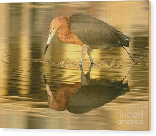Golden Reflection Wood Print