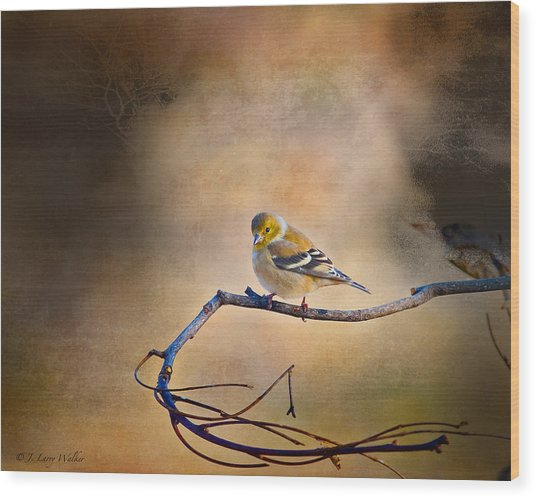 Goldfinch In Deep Thought Wood Print