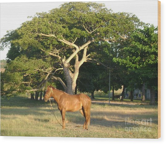 Good Horse At Dawn  Wood Print by Laurel Fredericks