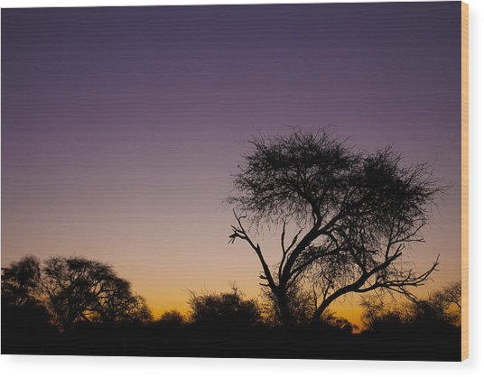 Good Morning Africa  Wood Print