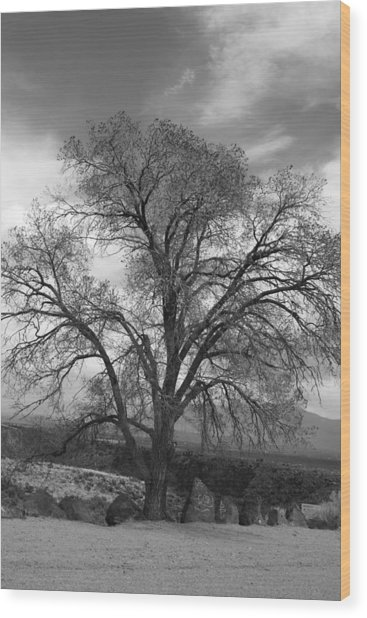 Grand Canyon Life Tree Wood Print