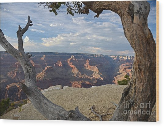 Grand Canyon Tree Wood Print
