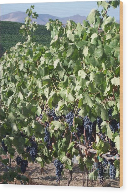 Grapes Wood Print