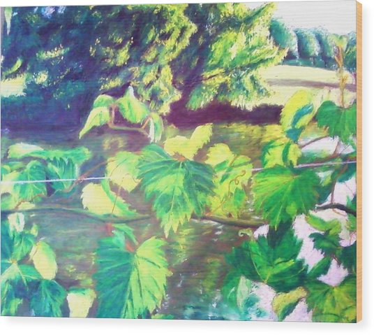 Grapevines Toledo Botanical Gardens Wood Print by Samuel McMullen