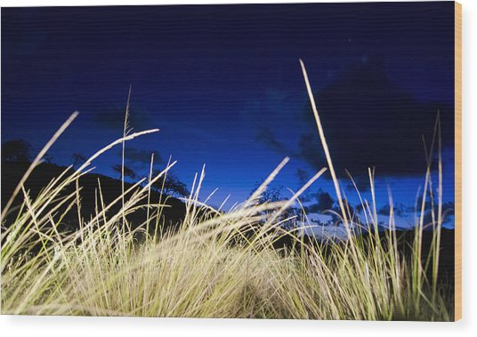 Grasses Wood Print by Dexter Fassale