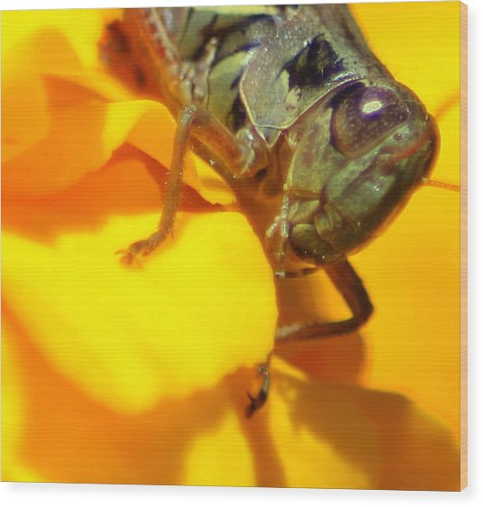 Grasshopper On Yellow Wood Print by Maureen  McDonald