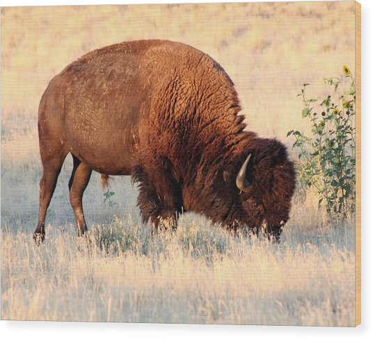 Grassland Giant Wood Print by Bob Bahlmann