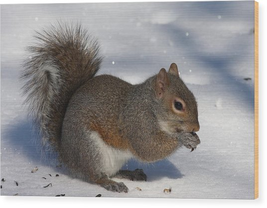 Gray Squirrel On Snow Wood Print