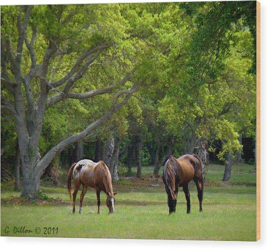 Grazing Pair Of Horses Wood Print